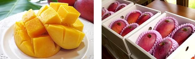 沖縄産 完熟マンゴー